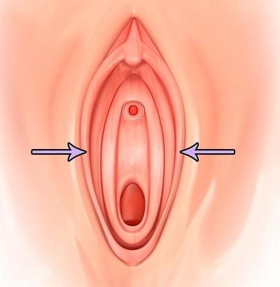 オマンコの中の膣の位置